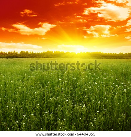 Sunset over green field. - stock photo
