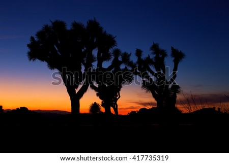 Sunset over Joshua Tree, Joshua Tree National Park, USA