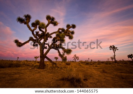 Sunset over Joshua Tree National Park, California, US. - stock photo