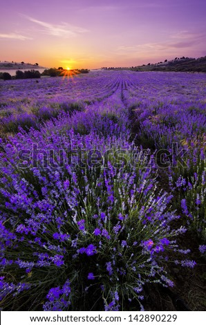 Sunset over lavender field in Bulgaria - stock photo