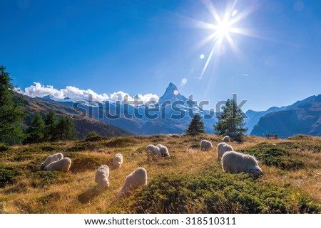 Sunset over Matterhorn with sheep in Swiss Alps - stock photo