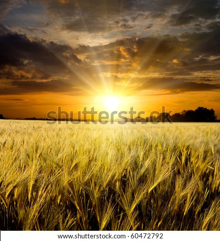 sunset over meadow - stock photo