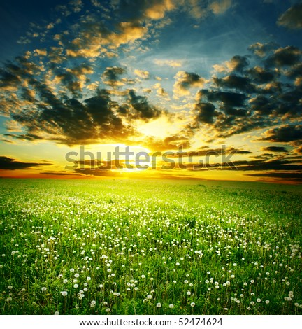 Sunset over meadow with dandelions - stock photo