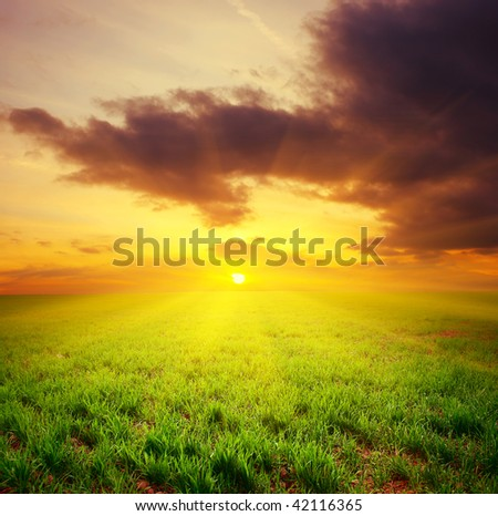 Sunset over meadow with green grass - stock photo