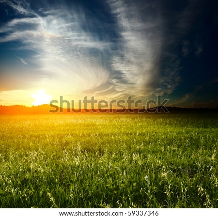 Sunset over meadow with wild herbs - stock photo