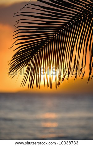 Sunset over ocean with palm frond silhouette at Maui, Hawaii. - stock photo
