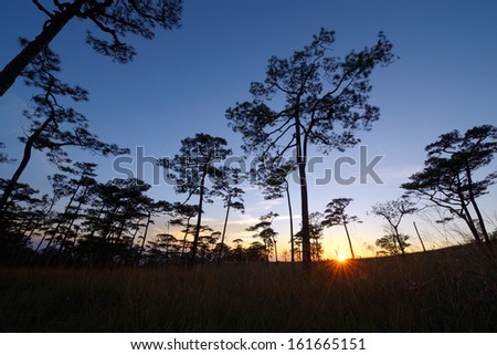 Sunset over pine forest in Thailand