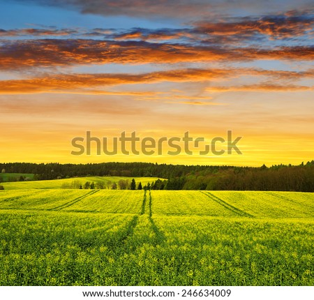 Sunset over spring landscape with rapeseed field - stock photo