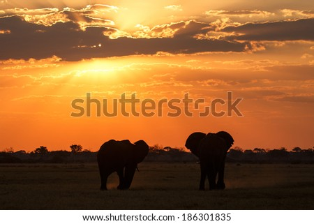 Sunset Over The Chobe National Park, Botswana, Africa - stock photo