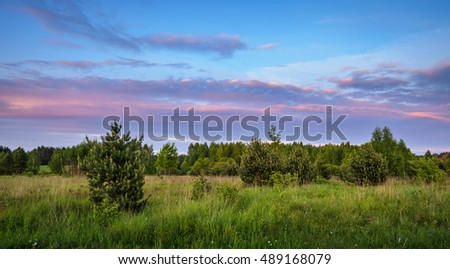 sunset over the field with young blossoming pines