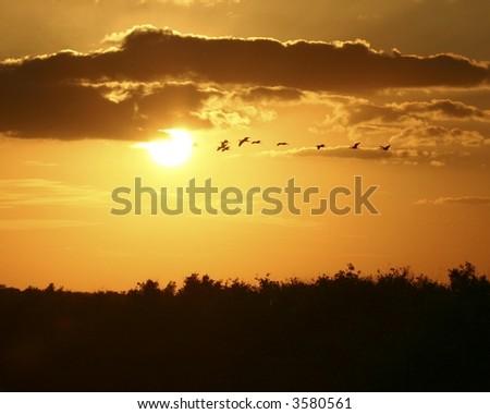 Sunset over the Florida everglades - stock photo