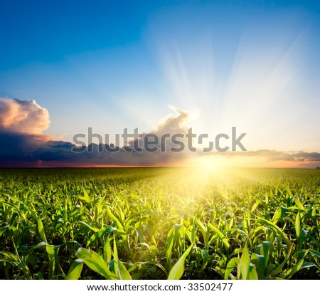 sunset over the green field - stock photo