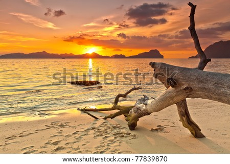 Sunset over the island. Dry tree on the foreground - stock photo