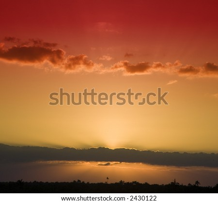 Sunset over the jungle of Central American taken on top of the pyramid at Altan Ha. Palm trees in the background. - stock photo