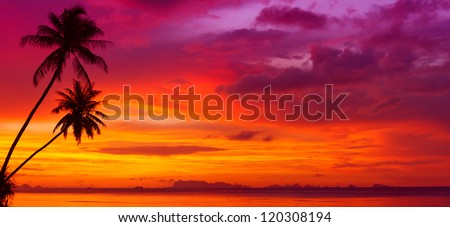 Sunset over the ocean with tropical palm trees silhouette panorama
