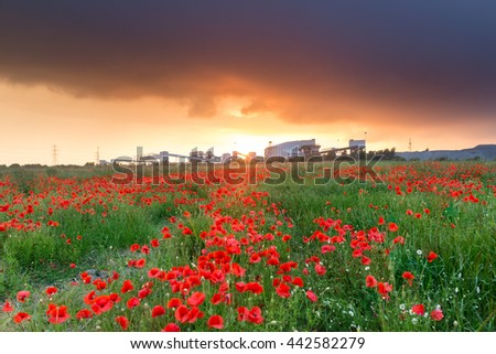 Sunset over the poppies at Killingly Colliery