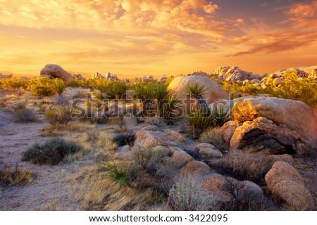 Sunset over the rocks and plants of Joshua Tree National Park, Mojave Desert, California. - stock photo