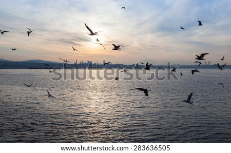 sunset over the sea with seagulls , Istanbul
