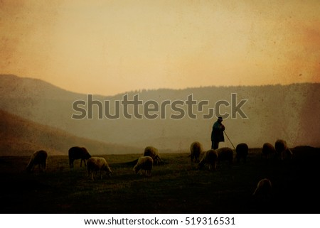 sunset over the sheep herd and his shepherd, vintage textured photo