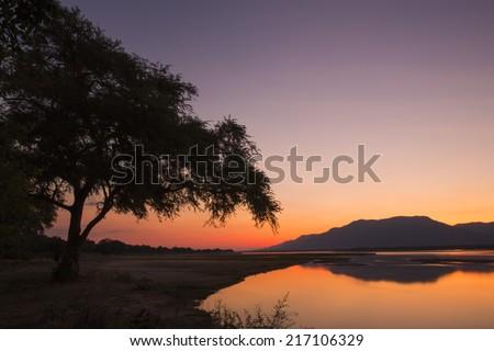 Sunset over the Zambezi river and Ana tree - stock photo