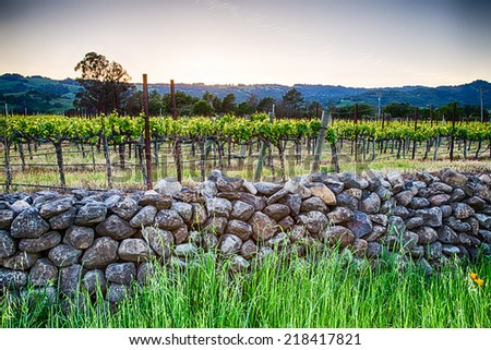 Sunset over vineyards in California's wine country. Sonoma county, California - stock photo