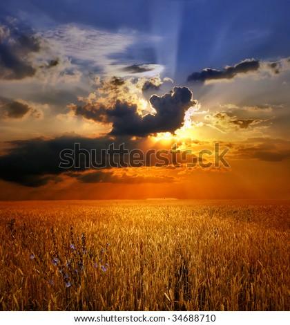 Sunset over wheat field. Autumn landscape - stock photo