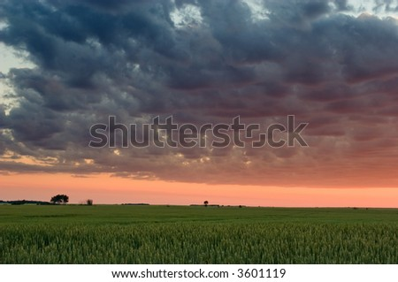 Sunset over wheat field, Gilbert Plains, Manitoba, Canada - stock photo