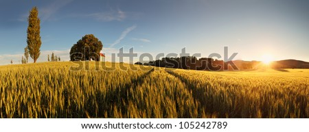 Sunset over wheat field with path and chapel in Slovakia - panorama - stock photo