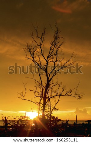 Sunset ray with dead tree silhouette