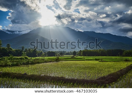 Sunset rise down to rice field.