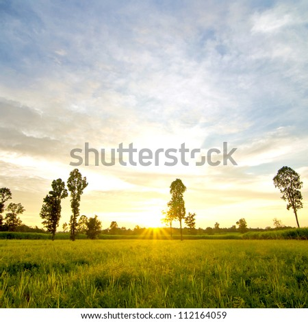 Sunset scene in grassland with diptercarp trees - stock photo