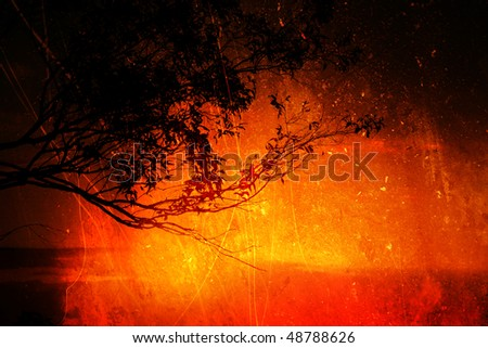 Sunset Silhouette of a Gum Tree