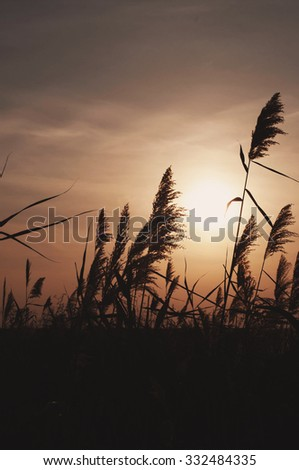 Sunset Sky Background, sunset, Landscape ,sunny dawn in a field, orange color, autumn,  evening nature, beautiful field, plant ,  - stock photo