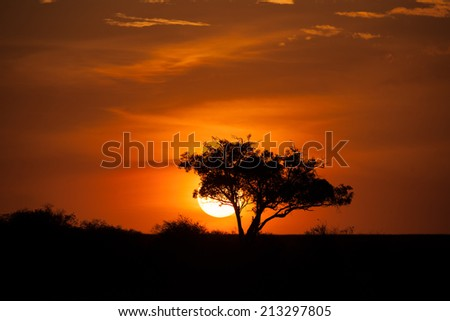 sunset sky in the savannah of africa