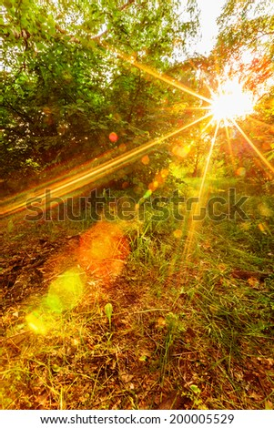 Sunset sunshine through branches in spring forest - stock photo