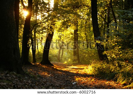 Sunset through branches of trees - stock photo