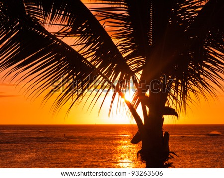 Sunset through palm tree in beautiful Hawaii - stock photo