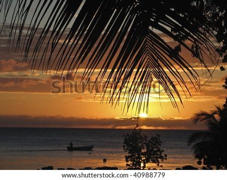 Sunset through palms - stock photo