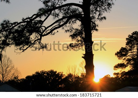 Sunset through the Pines - stock photo