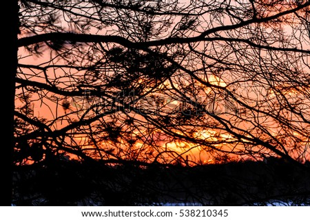 Sunset through tree branches