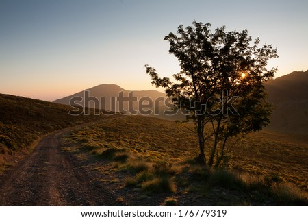 sunset tree by the roadside - stock photo