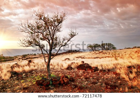 Sunset tree of Hawaii. Photographed on Big Island. Hawaii. USA - stock photo