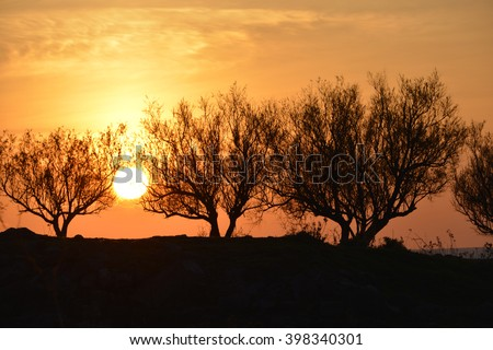 sunset trough olive trees