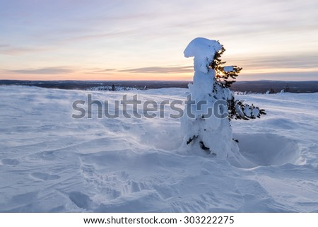 Sunset view and a lonely tree covered with snow - stock photo