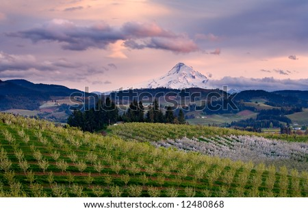 Sunset view of mount hood from an orchard in Hood River Oregon - stock photo