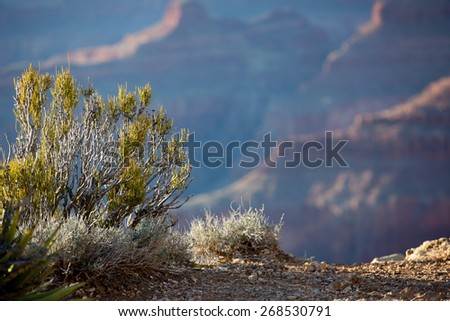 Sunset view of the Grand Canyon from the Hopi point along the South Rim, Arizona landmark. Bokeh blurred background, in focus foreground, great for text or advertising - stock photo