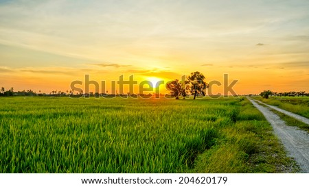 Sunset view over paddy field - stock photo