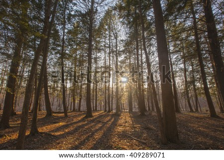 Sunset view through pine trees in the Berkshire Mountains of Western Massachusetts. - stock photo