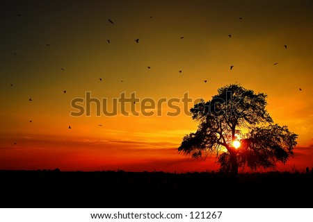 Sunset with a tree and birds. - stock photo