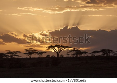 Sunset with acacia in the african savanna - stock photo
